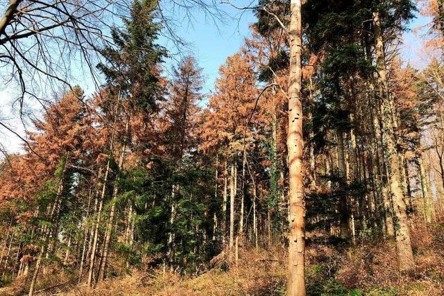 Förster in der Region richten den Wald mehrgleisig für die Zukunft aus
