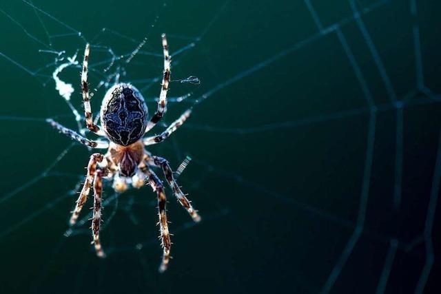 Autofahrerin erschrickt über Spinne im Auto und baut einen Unfall