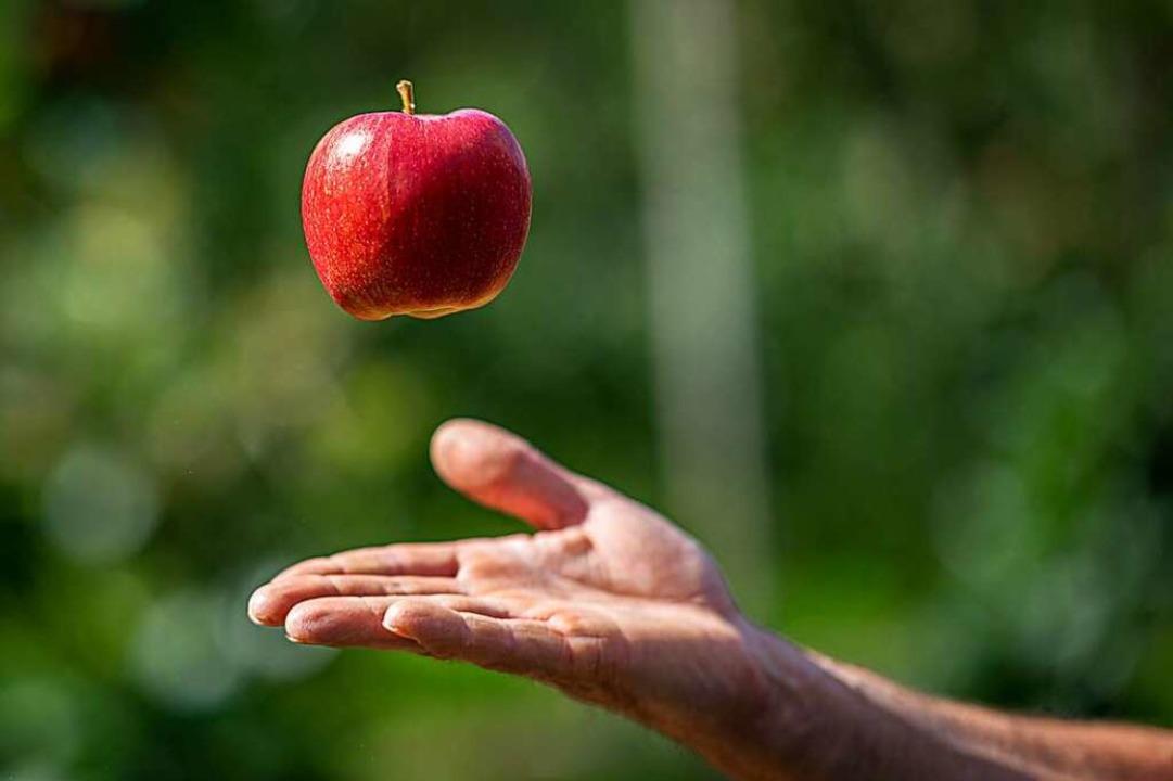 Durch die kühleren Sommernächte haben die Äpfel eine satte Farbe bekommen.    Foto: Daniel Reinhardt (dpa)