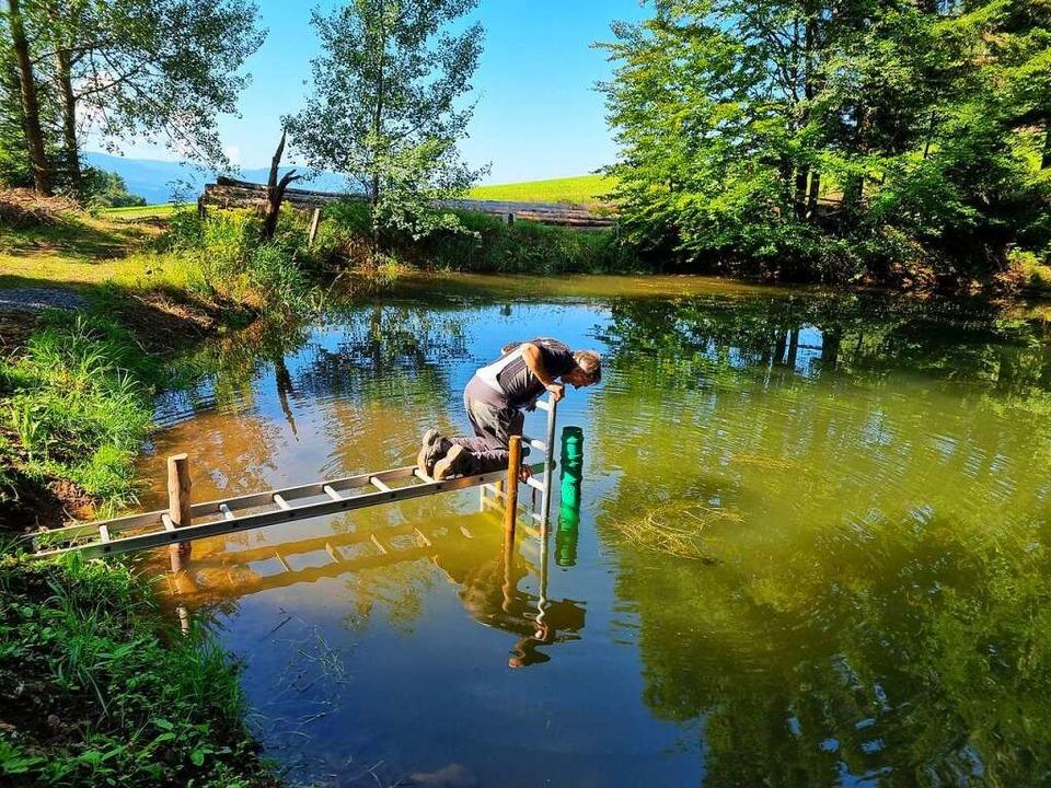 Josef Saier bückt sich, um das grüne R...kern und Wasser in den Bach zu leiten.  | Foto: Nadine Klossek-Lais