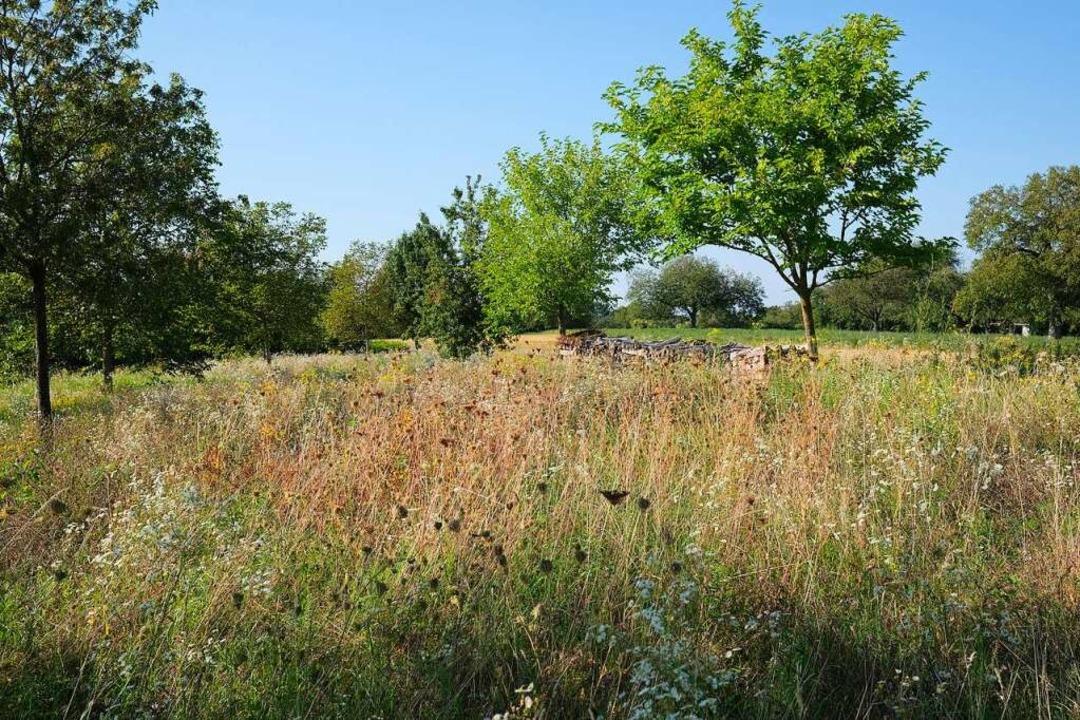 Bis in den September hinein hat sich e...falt an Gräsern und Blumen entwickelt.  | Foto: Johannes Weitzel