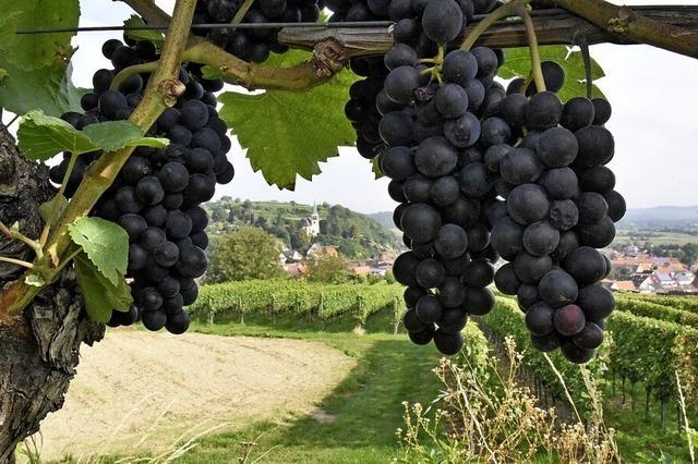 Was wurde aus dem Bahlinger Wein?