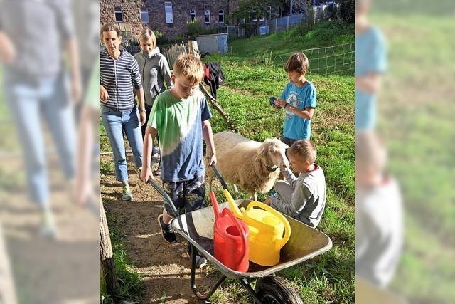 Schule zwischen Huhn und Schaf
