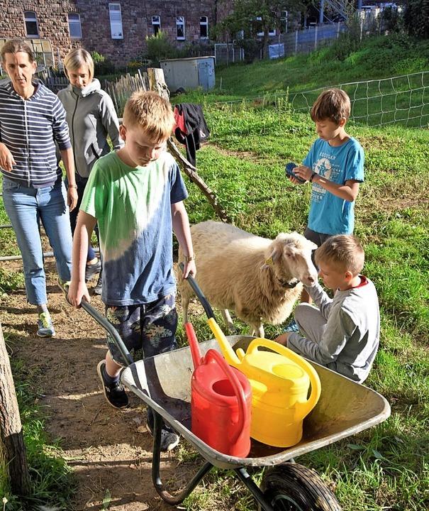 Das Versorgen der Tiere des Schulbauer...h zum Tagesprogramm der Sommerschule.   | Foto: Markus Zimmermann