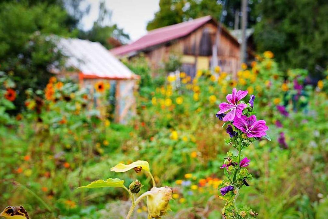 Idyllisch: Zum Hof gehört ein in diesen Tagen üppig blühender Bauerngarten.  | Foto: Kathrin Blum