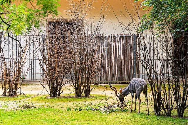 110 Jahre altes Antilopenhaus im Basler Zoo nach Umbau wieder offen