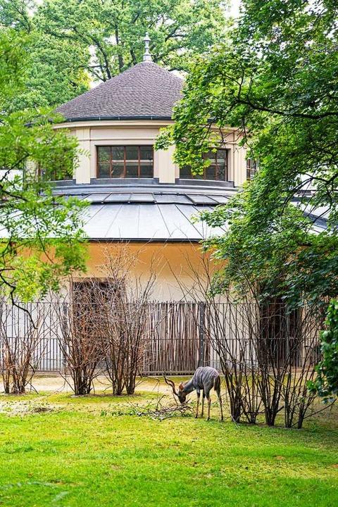 Das Antilopenhaus steht für die Typolo...häuser zu Beginn des 20. Jahrhunderts.    Foto: Zoo Basel (Torben Weber)