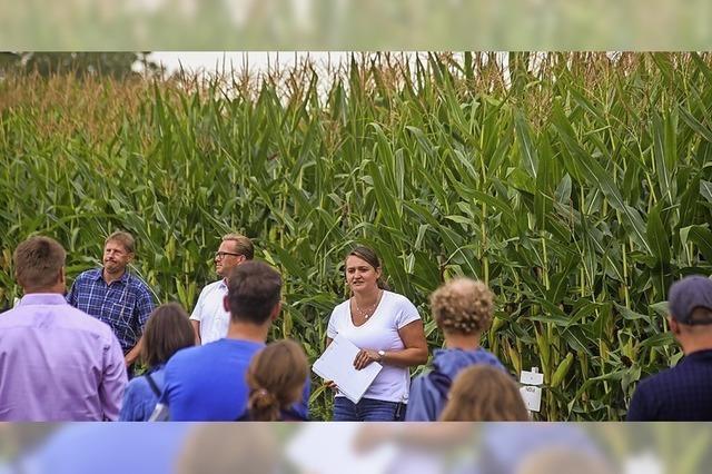 Sojabohnen anstatt Mais-Monokulturen