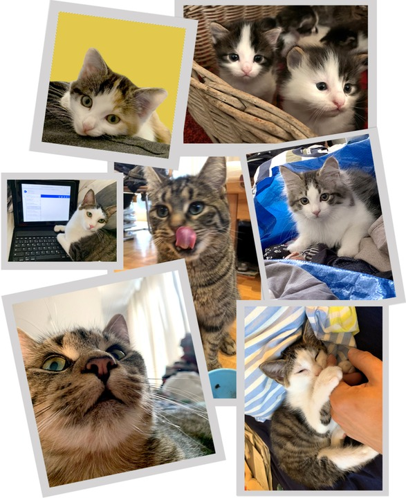 Katzen – manchmal stressig, aber meistens purer Gewinn   | Foto: Frank Zimmermann
