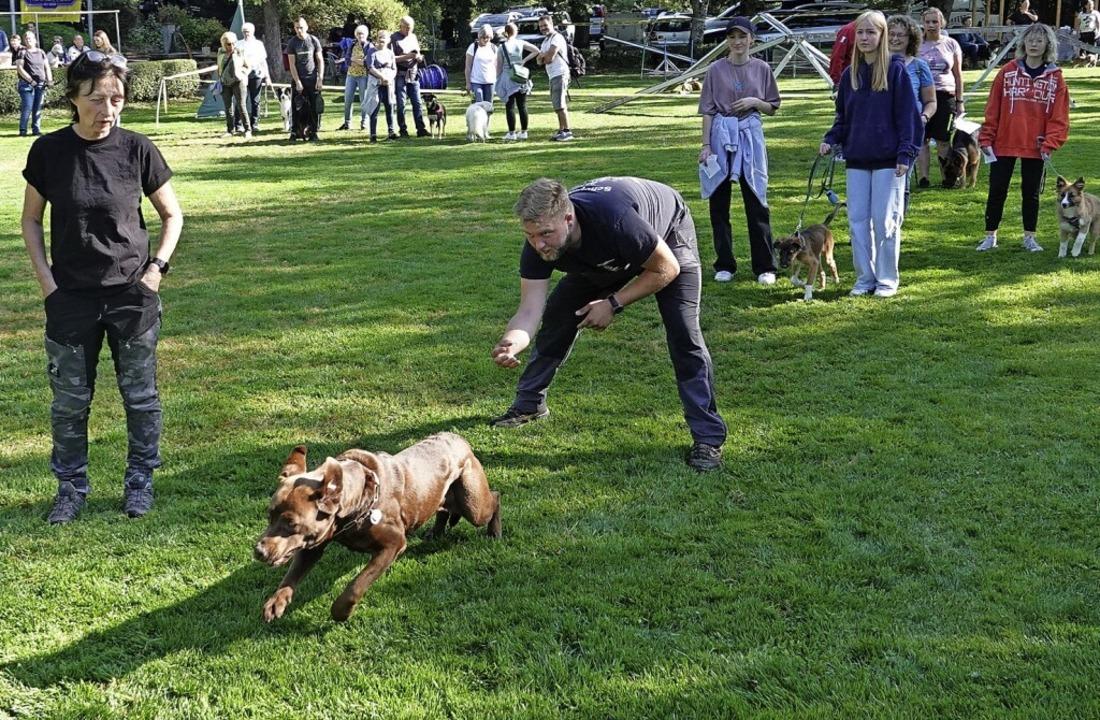 Mehr als 150 Hunde nahmen mit ihren He...des Schäferhundevereins Langenau teil.    Foto: Hans-Jürgen Hege