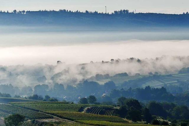 Morgennebel über Ettenheimweiler
