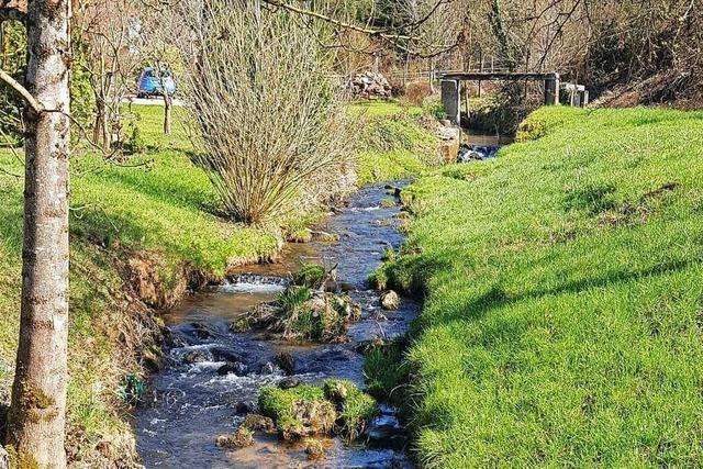 Die Böschung des Ettenbachs in Ettenheimmünster wird abgeflacht