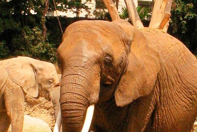 Ein Besuch im Basler Zoo ist ein Erlebnis für die ganze Familie
