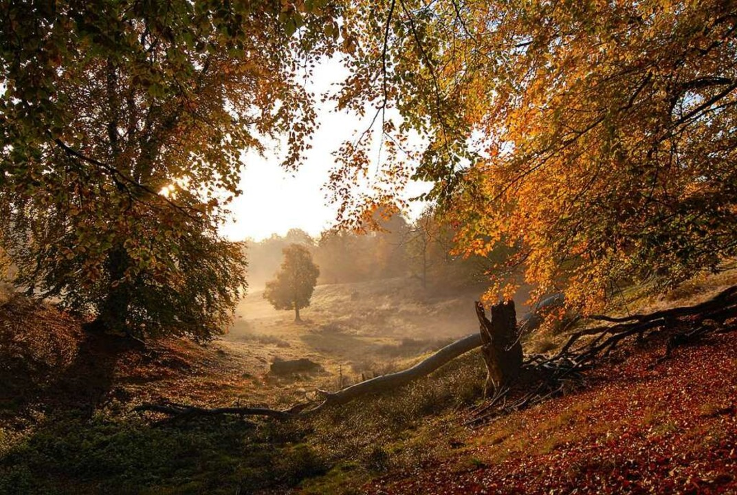 Urwüchsiger Wald  | Foto: Peter Stellmach