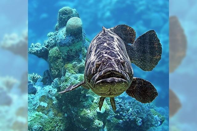 Mehr Schutz für dicke Fische
