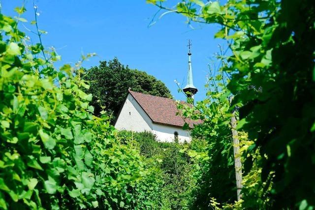 In Freiburg-Munzingen gibt's bald Sonnenstrom vom Rebgrundstück