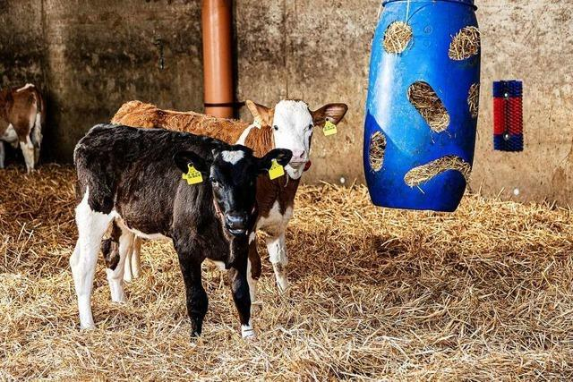 Ein Viehhändler aus Friesenheim bekommt den Tierschutzpreis des Landes