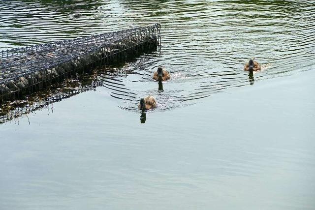 Wer Enten im Stegmattensee füttert, fördert die Sperrung des Sees