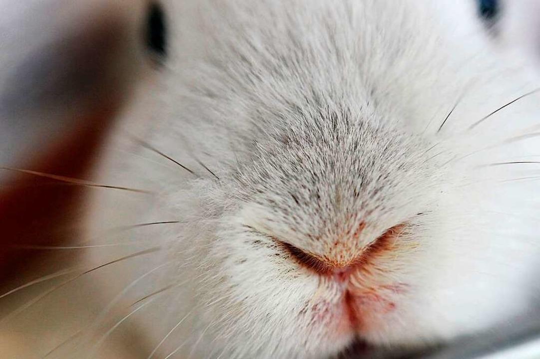 So süüüüüß: Kaninchen.  | Foto: Emily Wabitsch