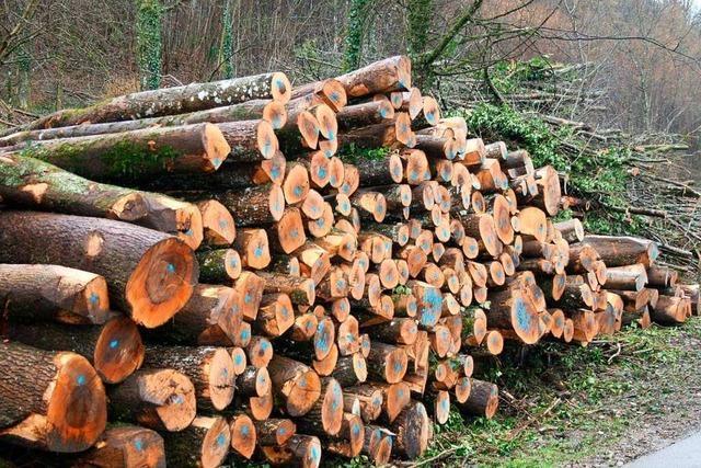 Waldbesitzer im Kreis Breisgau-Hochschwarzwald gründen Genossenschaft