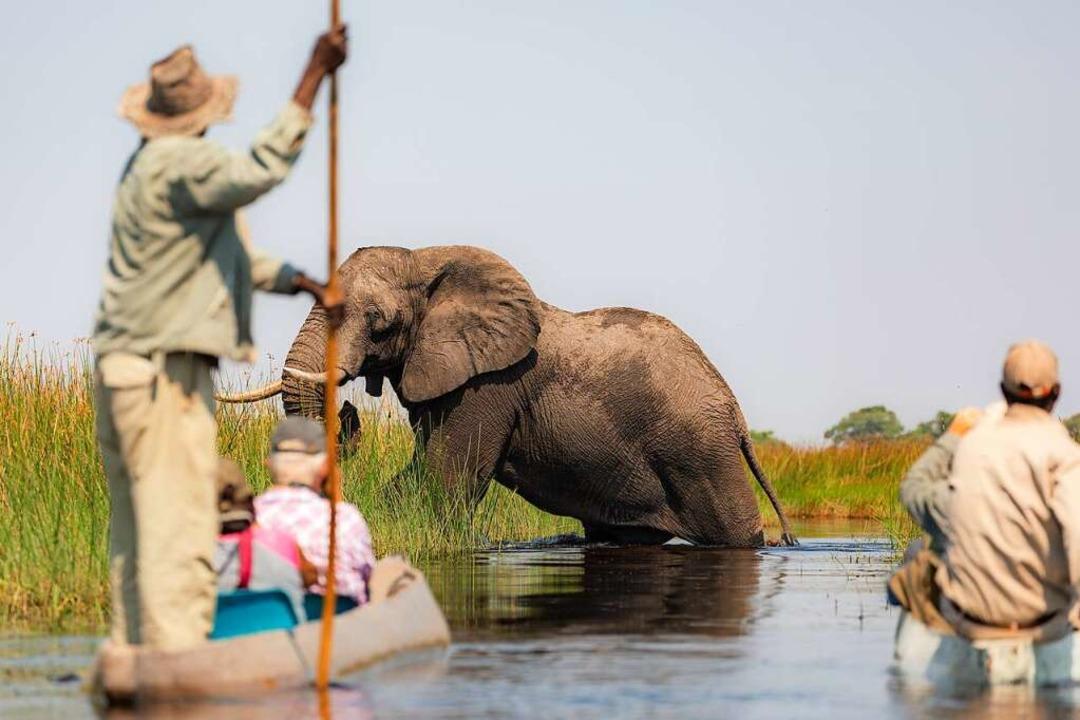 Begegnung mit einem Elefanten am Okavango    Foto: GM Photos  (stock.adobe.com)