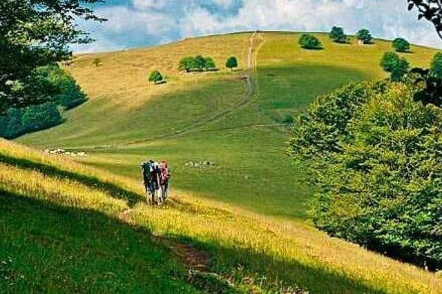 Ein Wanderführer mit Tagestouren in den Vogesen