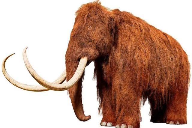 Das Mammut soll zurückkehren