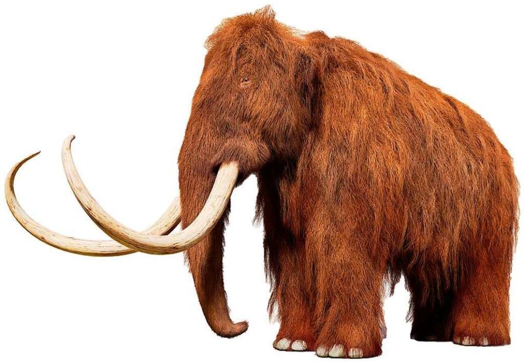 Von den Tieren mit den großen Zähnen werden Reste gefunden.  | Foto: dottedyeti  (stock.adobe.com)