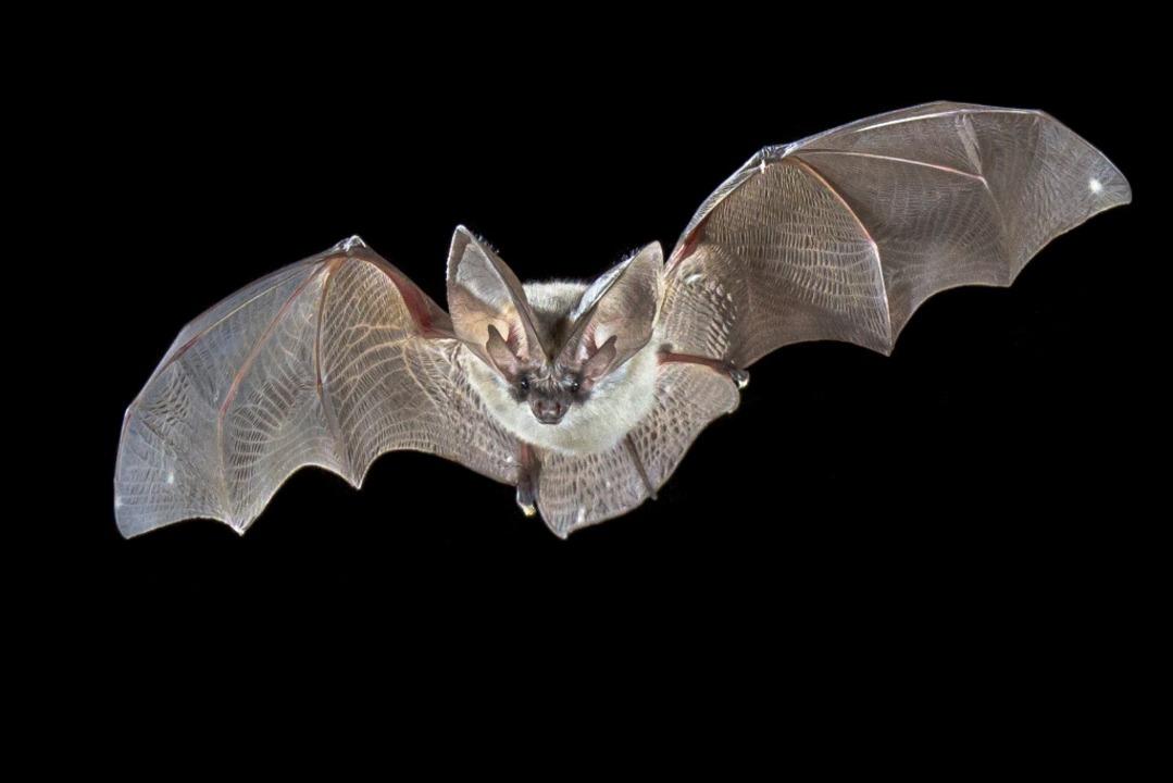 Fledermäuse profitieren schon länger vom Schutz des Gewanns Schangen-Dierloch.    Foto: Rudmer Zwerver