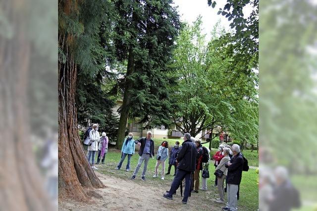 Panoptikum der Bäume
