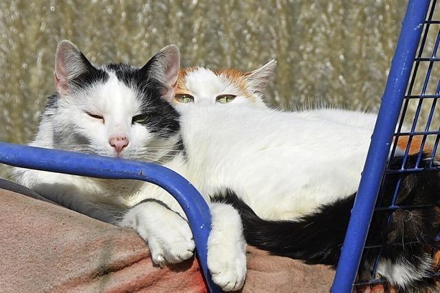 Katzenhalter müssen ihre Tiere kastrieren lassen