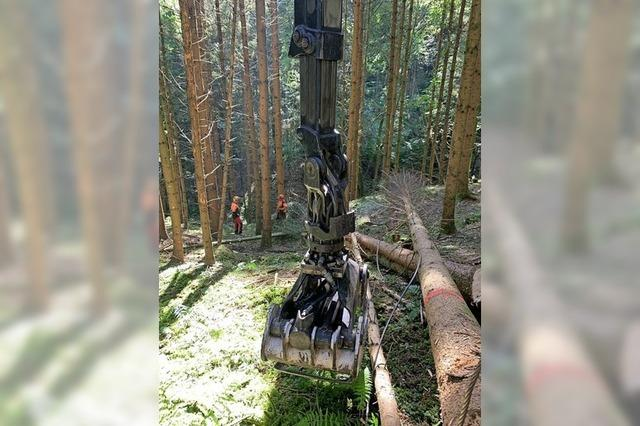 Im Sulzbachtal fallen Bäume
