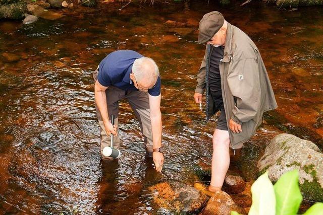 Die Temperatur der Elz steigt – den Fischen geht die Luft aus