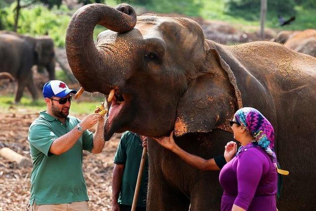Sri Lankas Elefanten sollen mehr Freizeit bekommen