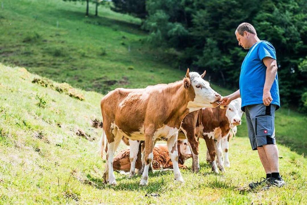 Die Hinterwälder Rinder stehen ab 2. O...tronomischen Betrieben im Mittelpunkt.    Foto: christoph eberle