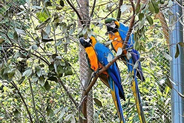 In Rio schnäbeln Romeo und Julia durch den Zoo-Zaun