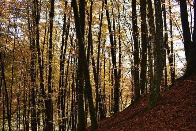 Das Interesse am Thema Wald ist im Kleinen Wiesental groß