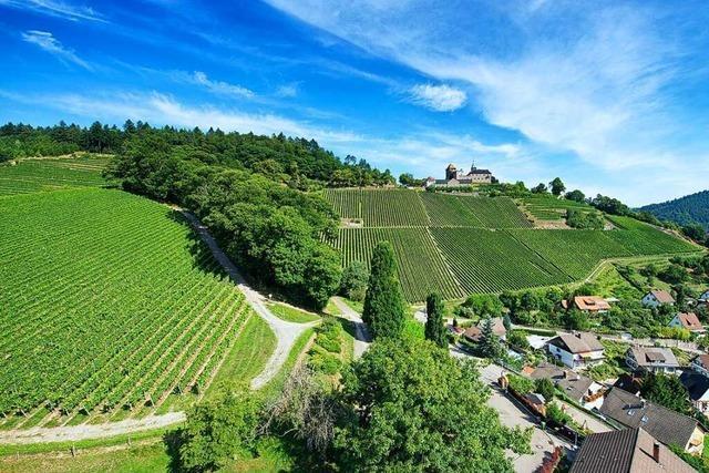 30 Prozent weniger Ortenauer 2021er-Wein in den Kellern als im Zehnjahresschnitt