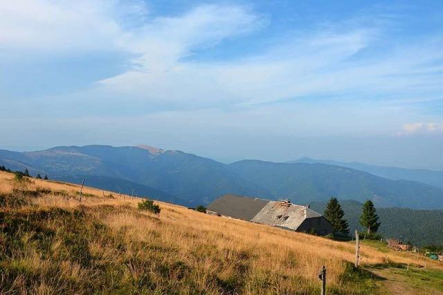 Wanderungen in den Vogesen sind wie Wanderungen im Schwarzwald – nur wilder