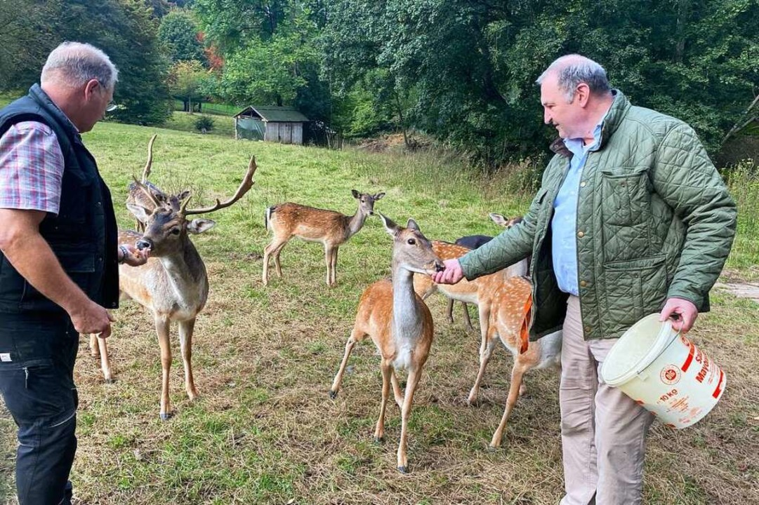 Gert Buchholz und Klaus Richter (r.) füttern die Hirsche mit Maiskörnern.  | Foto: Alexander Huber