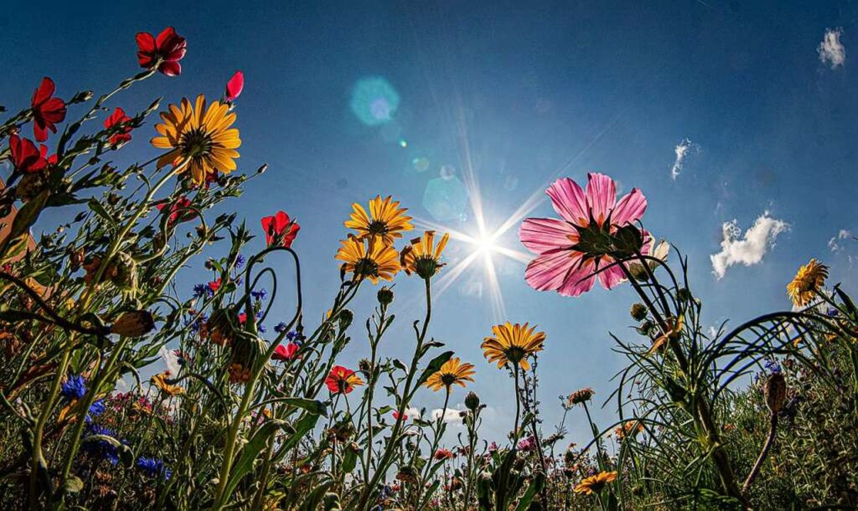 Blühstreifen können dabei helfen, den Lebensraum von Insekten zu erhalten.  | Foto: Frank Rumpenhorst (dpa)