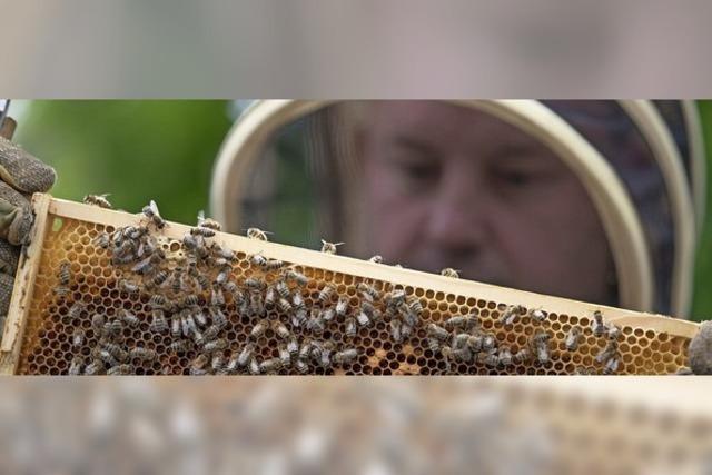 Weniger Honig
