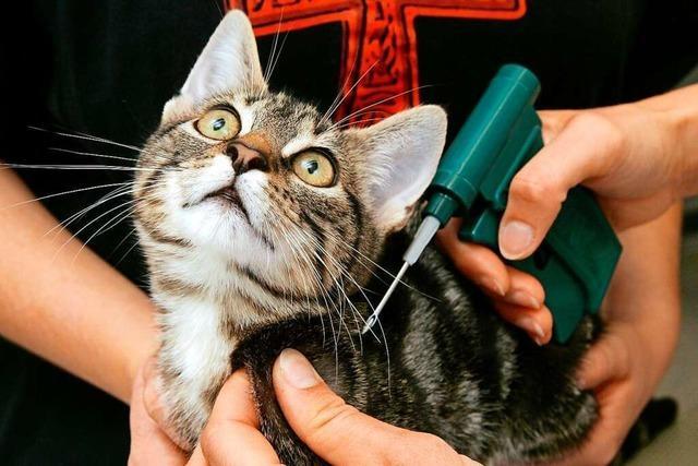 Pflicht zur Kastration soll unnötiges Katzenleid vermeiden