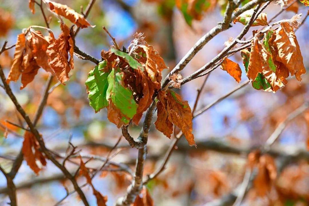 Im Herbst und Winter werden die toten Bäume aus dem Bestand entfernt.    Foto: Sylvia Sredniawa
