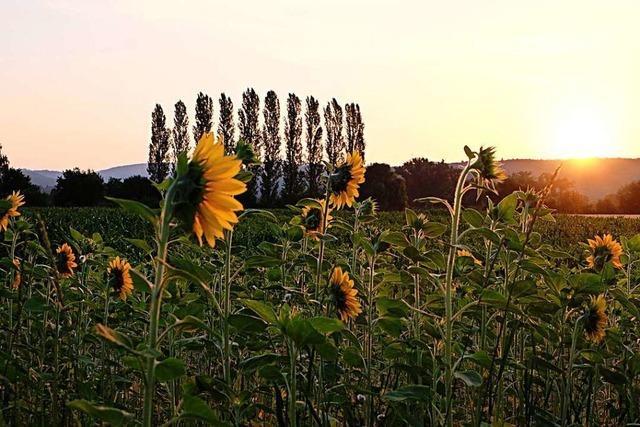 Wunderbarer Sommermorgen bei Teningen