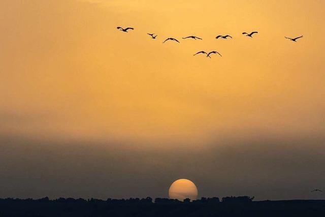 Wieso bleiben Zugvögel nicht im Süden, wenn es dort so schön ist?