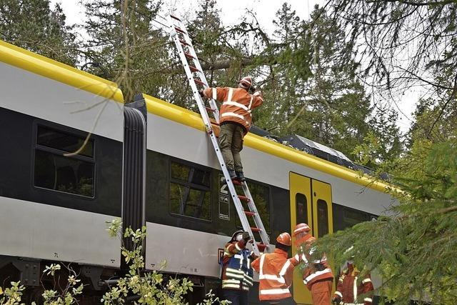 Umgestürzter Baum legt S-Bahn lahm