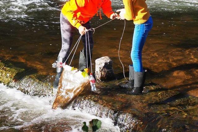 Schülerinnen aus Weil am Rhein erforschen die Mikroplastik im Fluss
